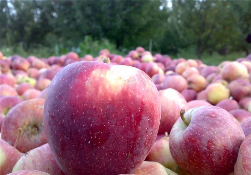 شادلو در گفت و گو با خبرنگاران: نیازی به واردات سیب نداریم، افزایش 30 درصدی فراوری مرکبات