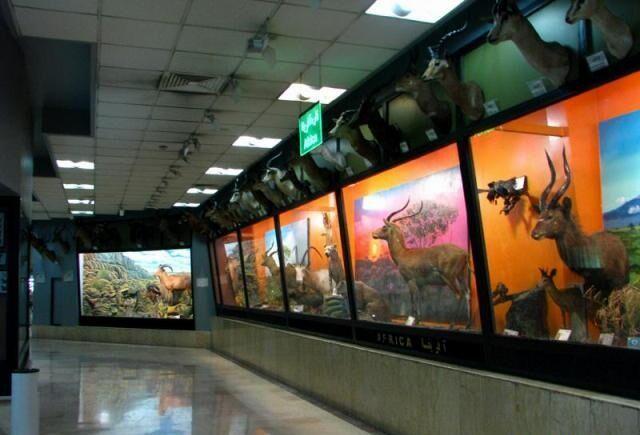 خبرنگاران مدیر کل دفتر موزه ملی تاریخ طبیعی و ذخایر ژنتیکی سازمان محیط زیست منصوب شد