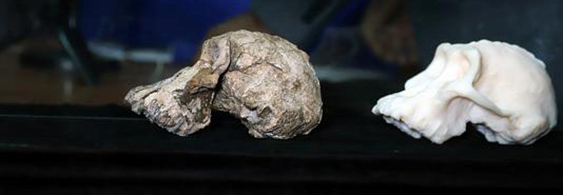 کشف یک جمجمه 4 میلیون ساله در اتیوپی ، پرسش های جدید در برابر دیرینه شناسان