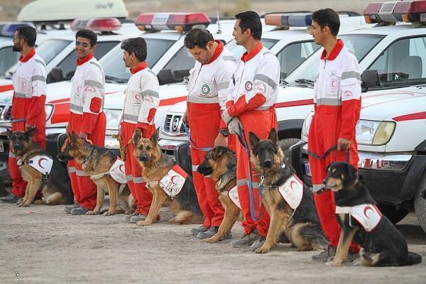 سگ های هلال احمر به دنبال کودک گمشده در قلعه نو