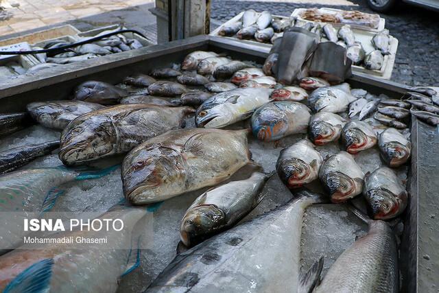 ماهی ناقل ویروس کرونا نیست